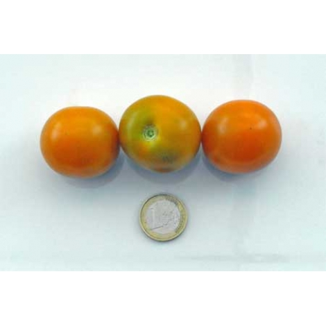 Tomate Big Sungold Select