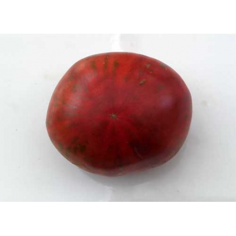 Tomate Tennessee Suited